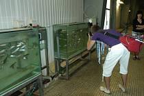 Vodu kontrolují v úpravě vody Želivka pstruzi.