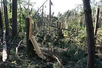 Vichřice zlikvidovala u Dubu patnáct hektarů lesa.
