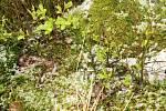 Aprílové počasí ve skutečnosti. Pod Blaníkem v lesích byl viditelný sníh.
