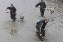 Výlov rybníčku v Bernarticích na návsi.