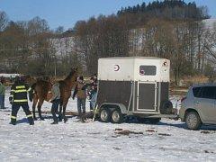 Odchyt koní v Jankově.