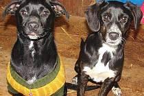 Tradiční akce psího útulku Maršovice je letos nachystána na zítřek. Také v letošním roce očekávají organizátoři velkou účast jako loni.