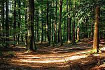 Lesy. Ilustrační foto