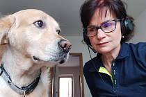 Práce systému psychosociální intervenční služby (SPIS) Zdravotnické záchranné služby Středočeského kraje. Na snímku krajská koordinátorka SPIS Jiřina Fousková se svým psem jménem Buddy vycvičeným pro canisterapii