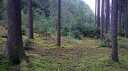 Houby v lesích na Podblanicku rostou.