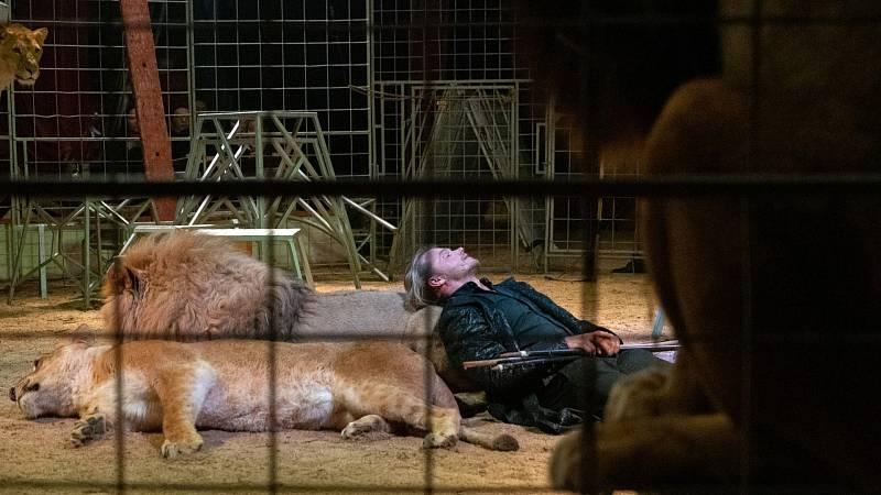 Zajímá vás, jak se trénují cirkusoví lvi? Prostřednictvím internetu budete moci být v sobotu 16. ledna svědky tohoto aktu.