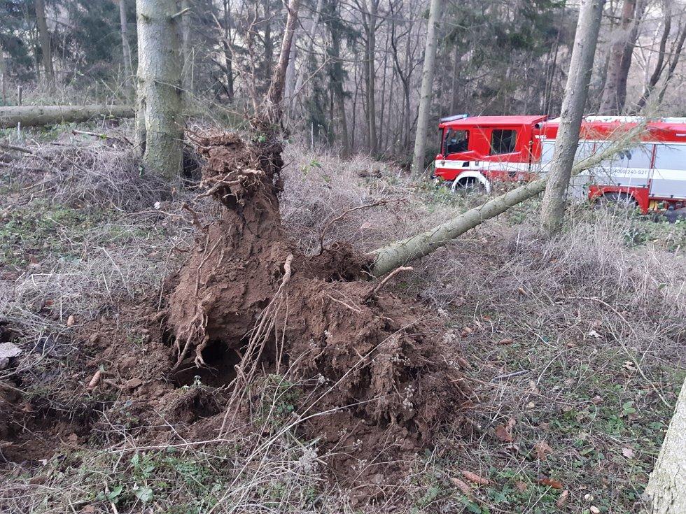 Vysoký Chlumec-strom spadlý na hasičské auto, pohled na vývrat od kořene.