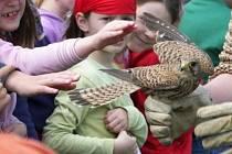 Děti z týnecké mateřinky vypustily uzdravenou poštolku zpět do volné přírody.
