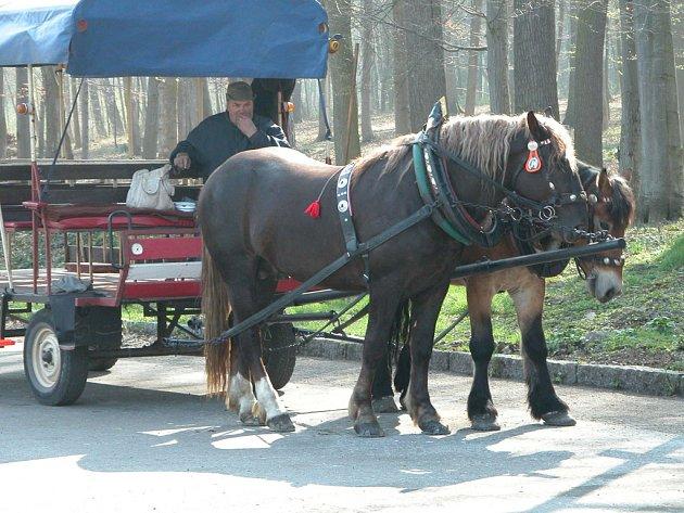 Koně už čekají.