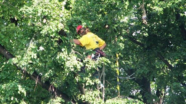 Prořežávání stromů v Hodějvského ulcic