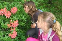 Po stopách legendy o žluté růži v Růžové zahradě na Konopišti.