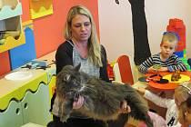 Do mateřinky v Mrači zavítala chovatelka s největším kočičím plemenem na světě.