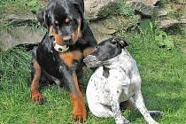 Psi, nejlepší přátelé člověka.