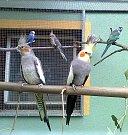 Ptáci v domácí voliéře.
