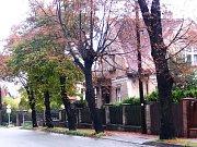 Návrch obnovy zeleně v centru Benešova