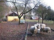 Ovce, které objekt hlídají mají i své zázemí