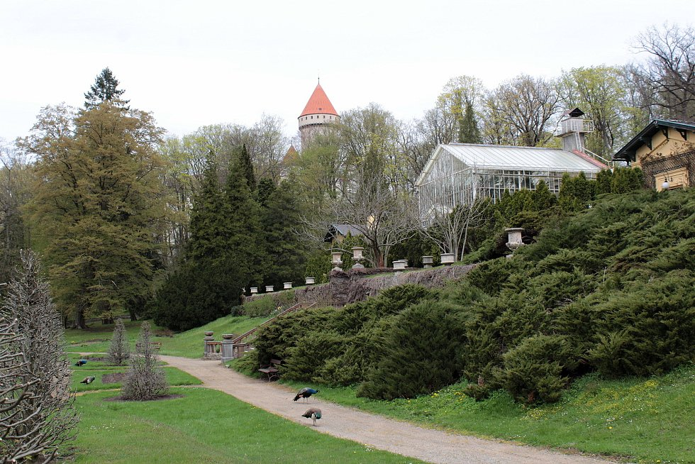 Konopišťská Růžová zahrada nabízí malebný pohled na vzhledné exteriéry, příjemně překvapí i tamější skleníky se zajímavou flórou.