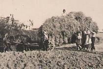 Petroupim, práce na poli. Kolem roku 1930.