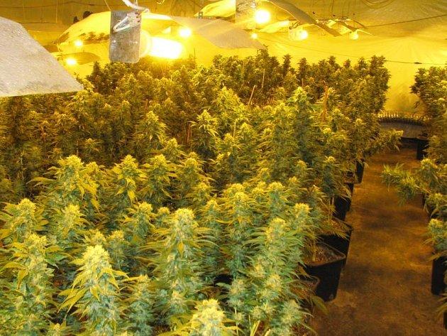 Policie zatkla cizince, který se o zhruba 2000 rostlinek konopí staral