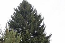 Při tradiční světelné show bude vánoční strom na Staroměstském náměstí rozsvícený v sobotu 29. listopadu v 17 hodin. Zatím zdobí zahradu chaty v obci na Benešovsku.