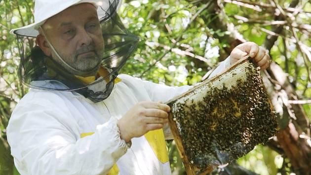 Včelař. Ilustrační foto.