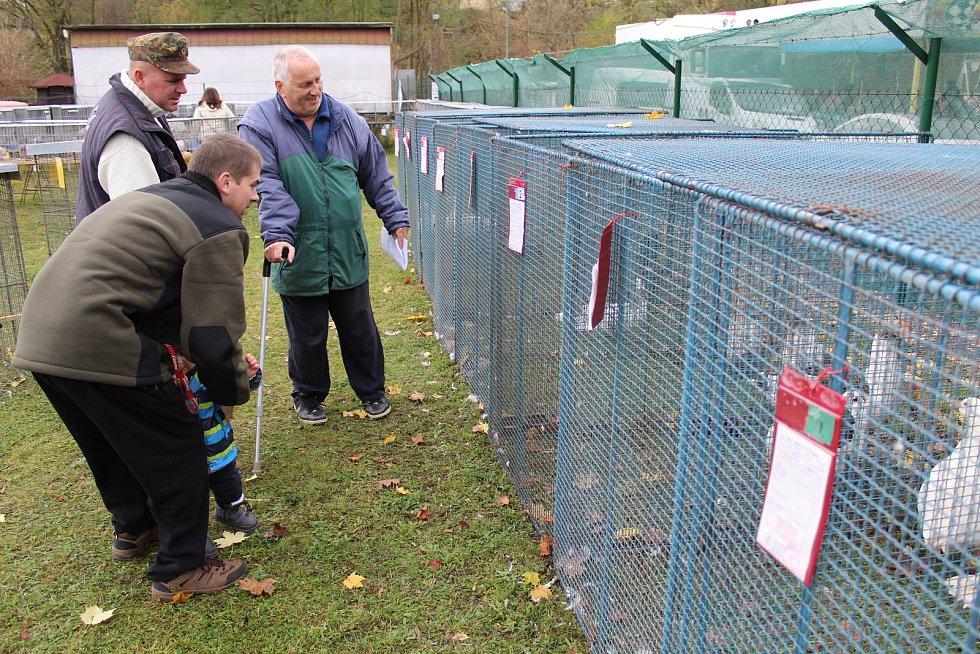 V týneckém Náklí se během posvícenského víkendu konala tradiční výstava chovatelů drobného zvířectva z místní organizace ČSCH.
