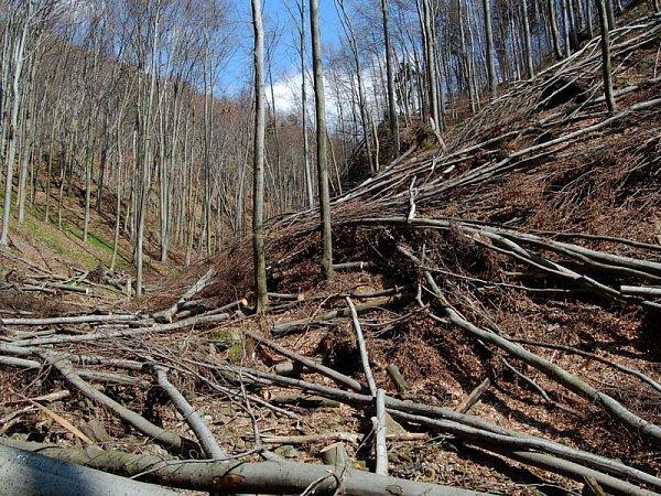 Lesáci varují, vpříštích dnech nevstupujte do lesa! Kmeny a kořeny stromů mohou být narušené.