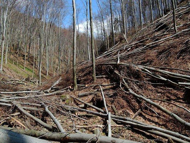 Lesáci varují, v příštích dnech nevstupujte do lesa! Kmeny a kořeny stromů mohou být narušené.