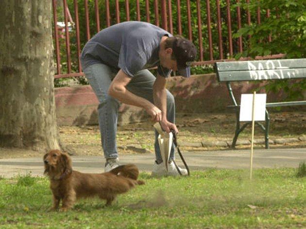 Každý chovatel je povinnen po svém zvířeti uklidit.