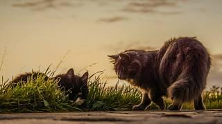 Velké kořist kočičky
