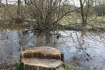 Povodí Vltavy coby správce řeky Blanice slibuje odklizení hromad dřeva i odstranění umělých hrází v řece. Zda se bude řešit i napravení situace kolem zničených úseků na pozemcích po najíždění těžké techniky, není zatím jasné. Koleje od vozů jsou ale v půd