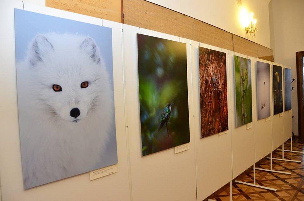 Příroda je hlavním tématem vlašimské výstavy.