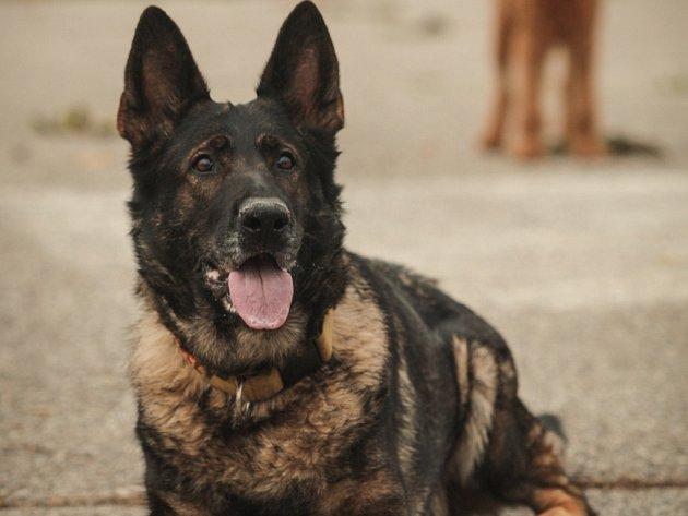 Nominujte svého psího miláčka do hlasování o Nejsympatičtějšího psího mazlíčka Deníku.