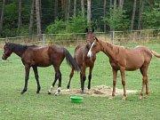 Koním z jankovské kauzy se daří lépe a lépe.