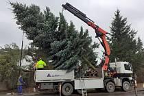 Transport vánočního stromu v Benešově.