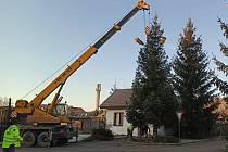 Vánoční strom na Ješutově náměstí v Bystřici u Benešova. Foto: Radka Macháčková