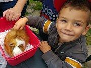 Příměstský tábor prožily děti mezi zvířátky