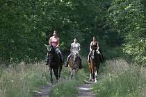 Koně do lesa nebudou moci. Ilustrační foto