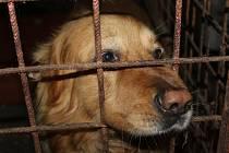 Psům v Psím útulku Maršovice podle pracovníků veterinární správy nic neschází.