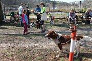 Mladí ochránci pořádají v  letošním roce různé benefiční akce, aby podpořili zvířata z vlašimské paraZOO.