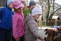 Naučný program s pitbulteriérem v Mateřské škole Berušky v Benešově.