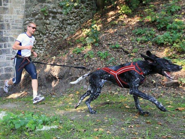 Závody psích spřežení mají několik kategorií. Jednou z nich je i ta, kdy muscheři nejedou na vozíku či saních, ale stejně, jako psi, běží po svých