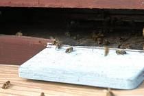 Ilustrační foto: Pravidelné dotace by měly včelařům na Benešovsku opět pomoci