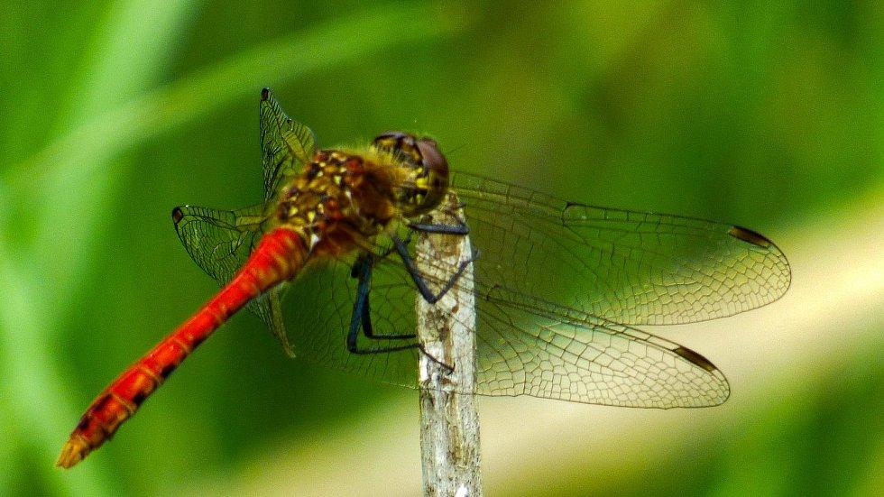 Fotografie detailů krás přírody.