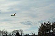 Pouštění létajících draků si užili nejmenší při Drakiádě.