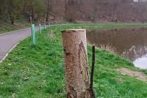 Stromky na levém břehu Sázavy v Týnci.