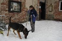 Německý ovčák se do útulku dostal v neděli, kdy byl nalezený u Osečan na Sedlčansku.