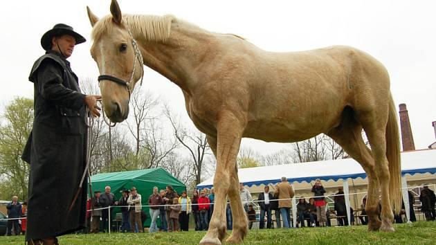 Koňský trh v Královicích