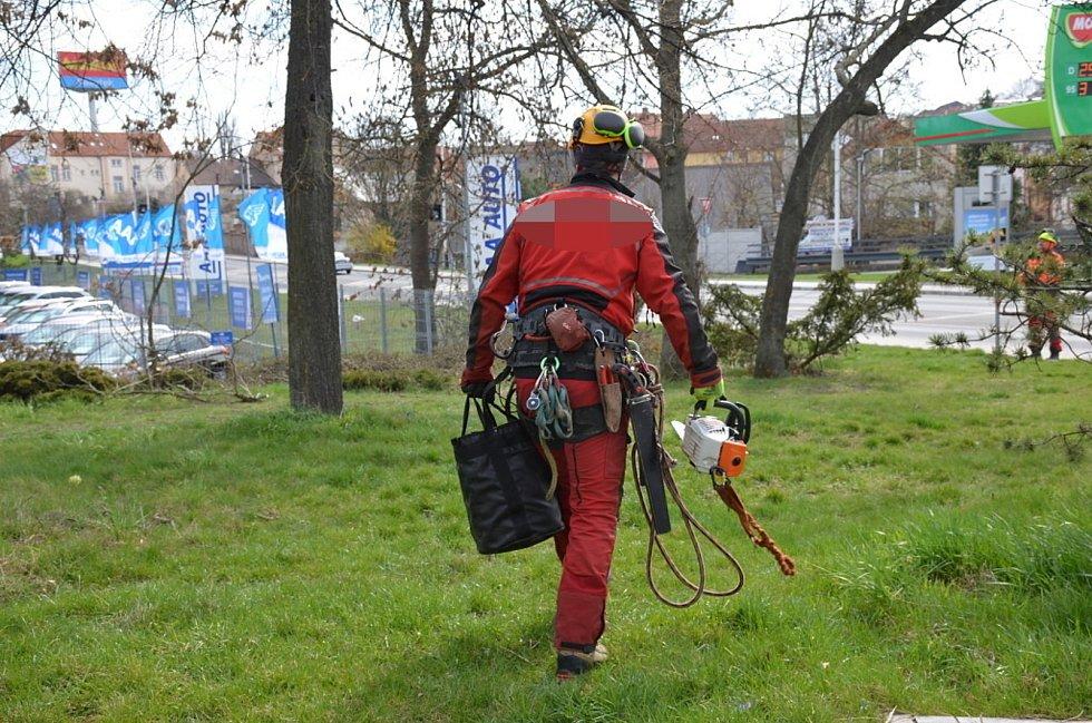 Se suchými větvemi se musí i v Kladně poradit horolezci.