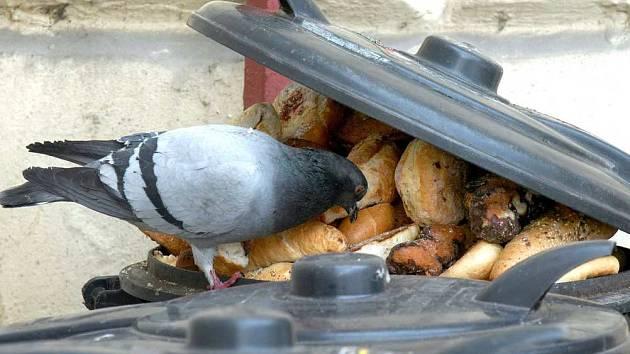 s rostoucími cenami pečiva pravděpodobně skončí hody i holubům.